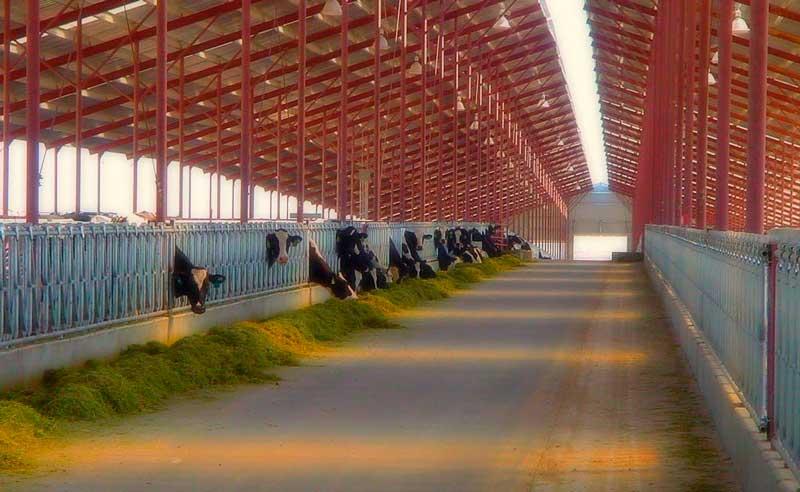 Пример рабочего комплекса по животноводству